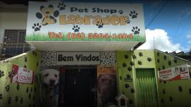 Pet Shop Labrador